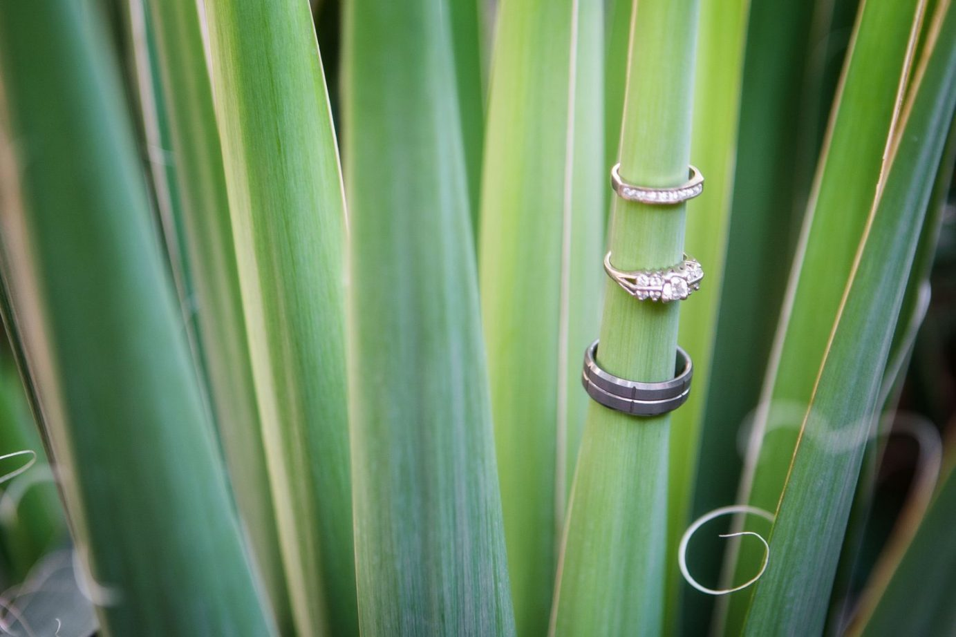 seattle-wedding-photographer-ring-shot-succulents