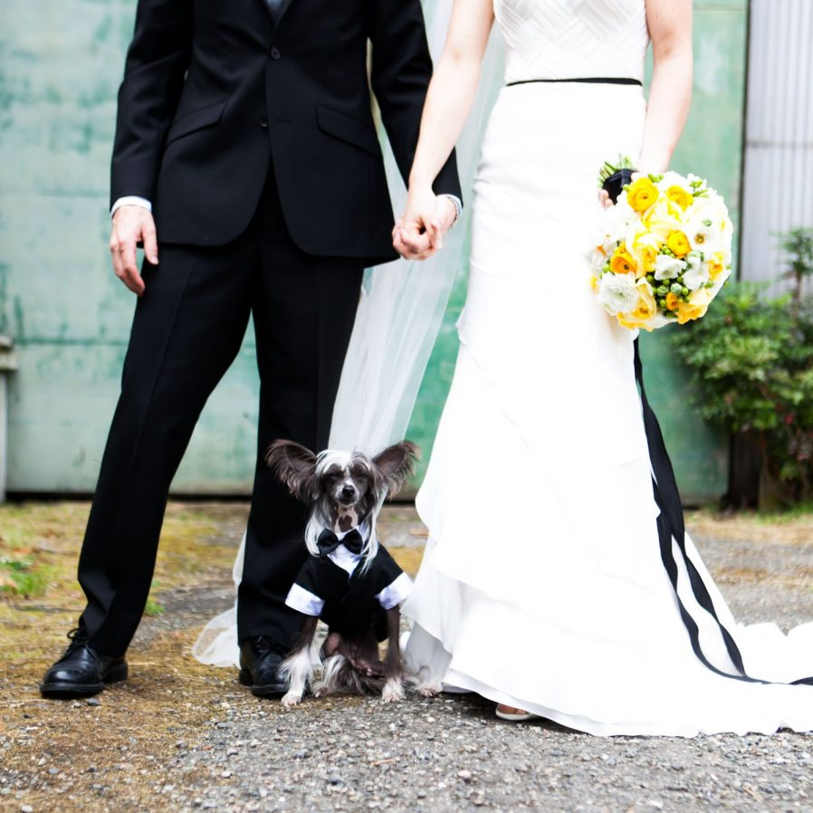 dog-in-tux-for-wedding-with-bride-and-groom
