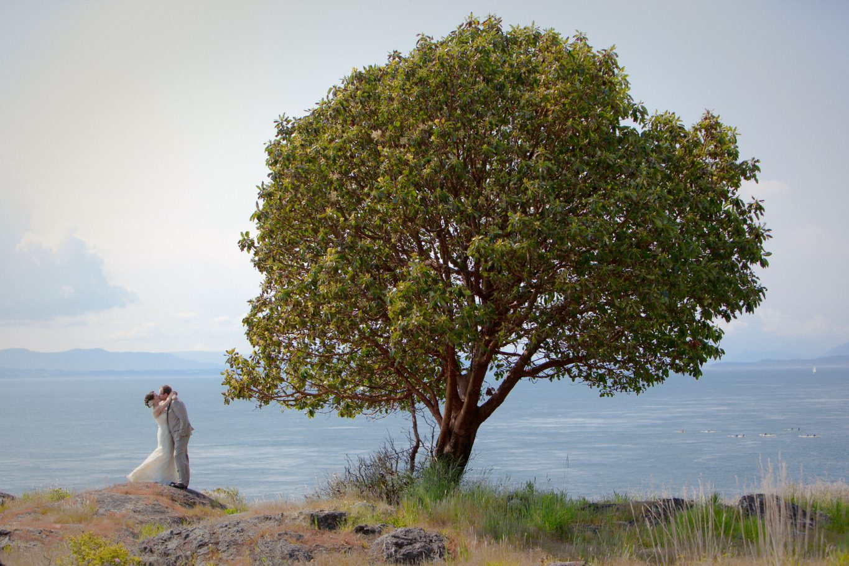san-juan-island-wedding-photo-idea-big-tree-and-bride-groom