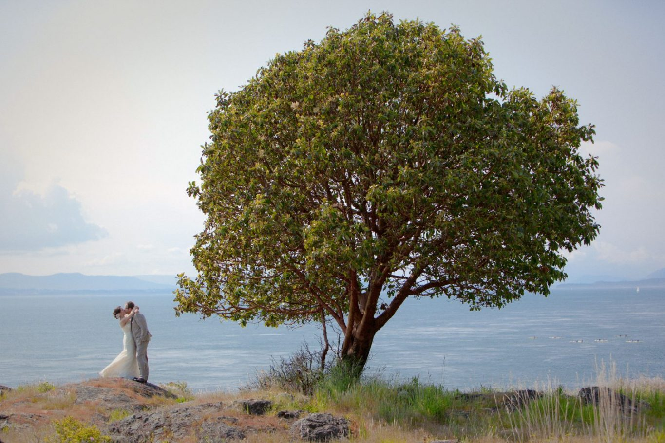 san-juan-island-wedding-photo-idea-big-tree-and-bride-groom