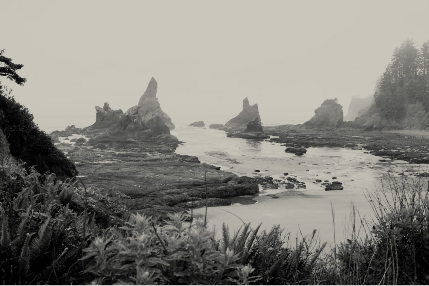 pacific-northwest-photo-fine-art-landscape-shi-shi-washington-coast_0002jpg